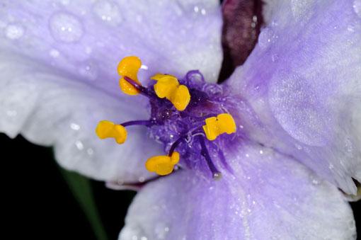灌水した後で、急に撮影をおっ始めちゃったのです。
