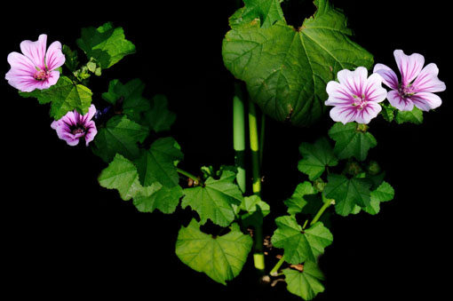 中央に見えるんは支柱ぢゃ~無くて、花茎です。