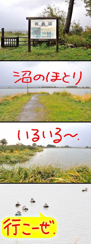 いよいよ沼畔に立つですよ。