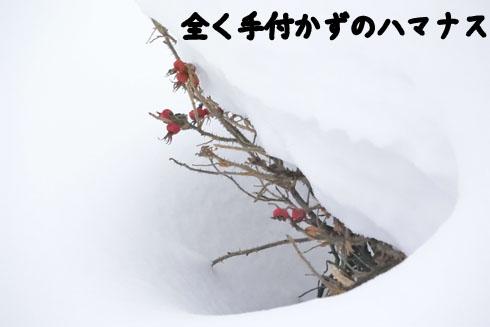DSC_1488.jpg