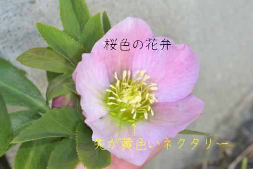 DSC_2968.jpg