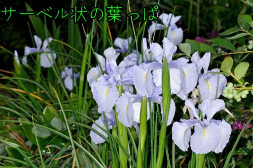 DSD_2160.jpg