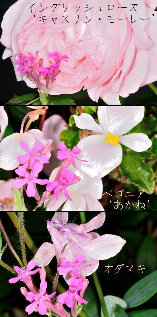 DSD_9976q90.jpg