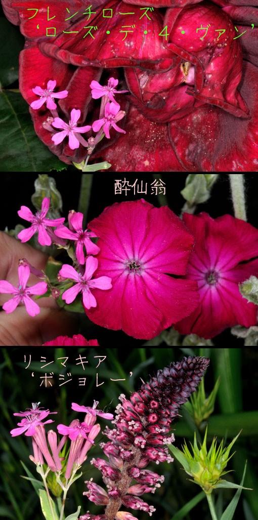DSD_9982q90.jpg