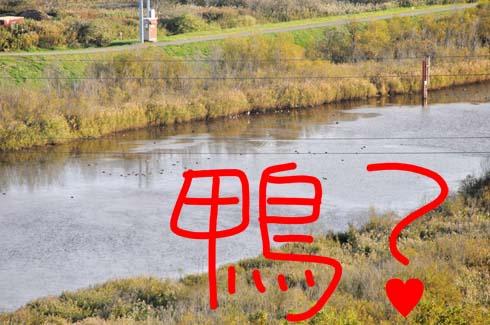 沼に野鳥がおるぞ。