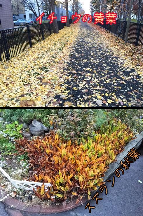 秋葉です。