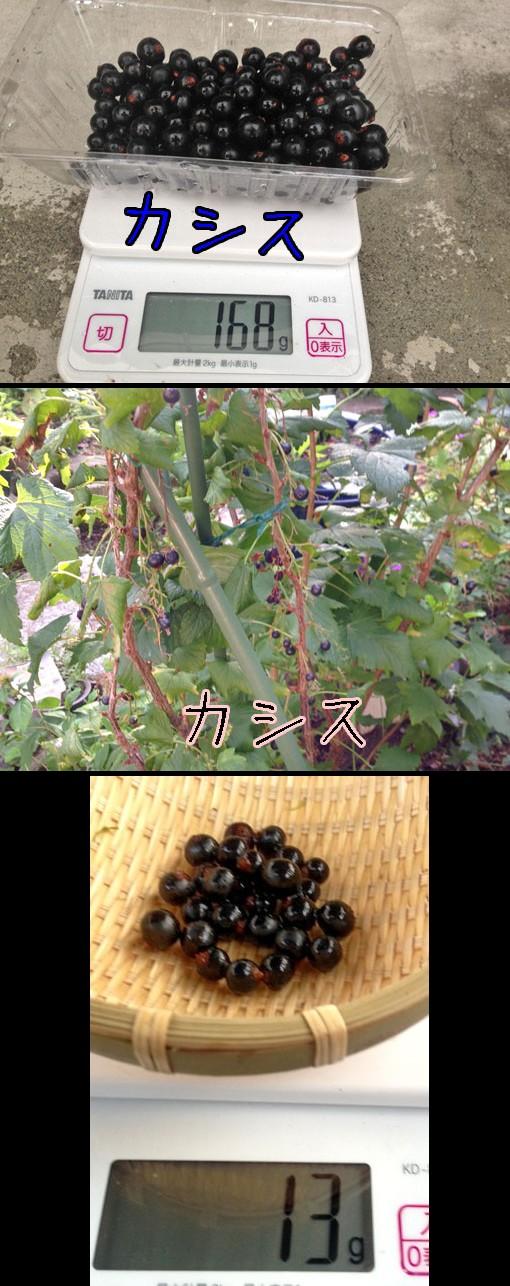 カシス(黒酸塊、Blackcurrant)