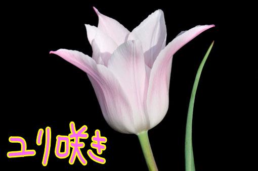 優しい花色です。