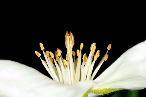 種も出来るものの、殖やすんは挿し木が効率的です。