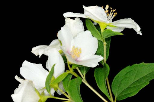 花の香りも増幅です。