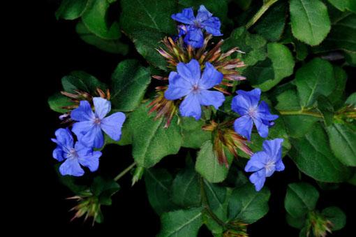 青い花が鮮烈です。