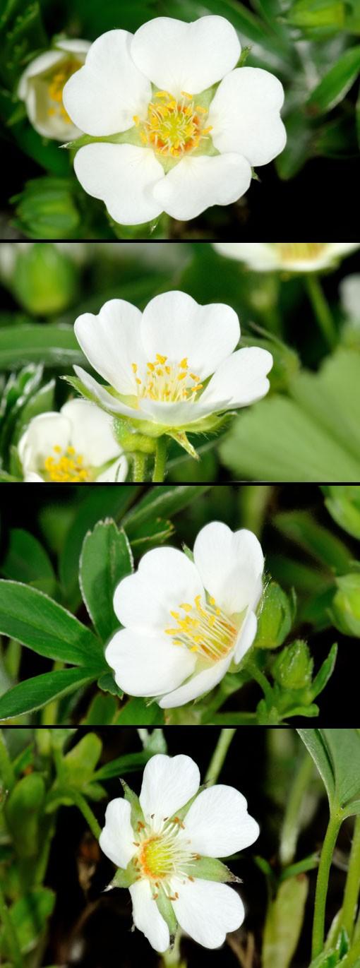 ハート型の花弁もチャームポイントです。