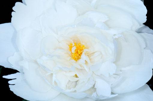 花底が見えます。