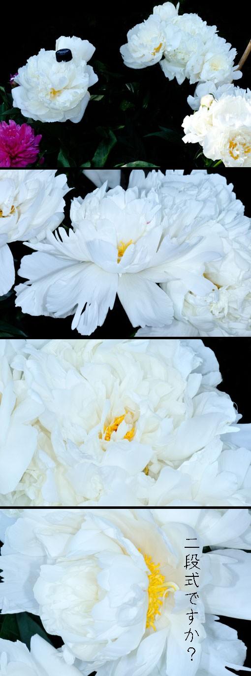 花は重量もヘビーです。