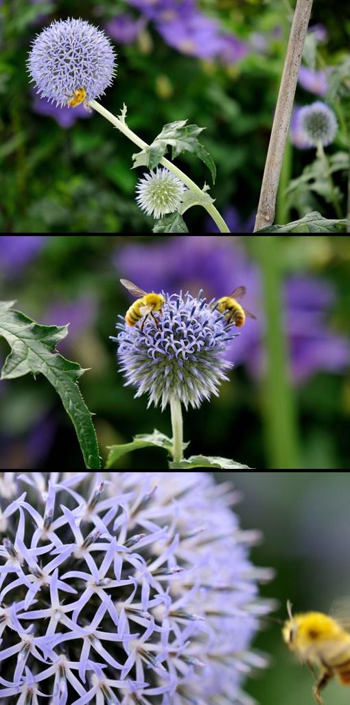 ミツバチまやちん。