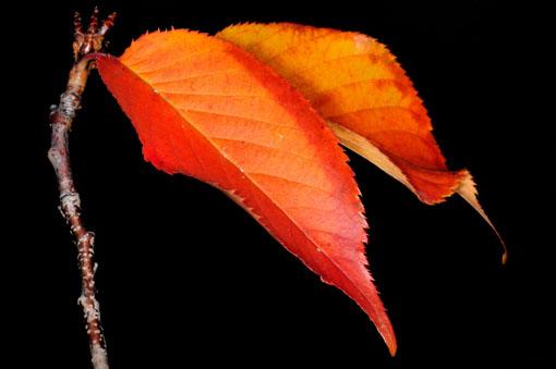 桜の秋葉です。