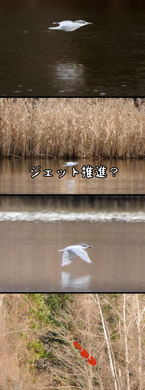 滑らかに湖面を過ぎります。