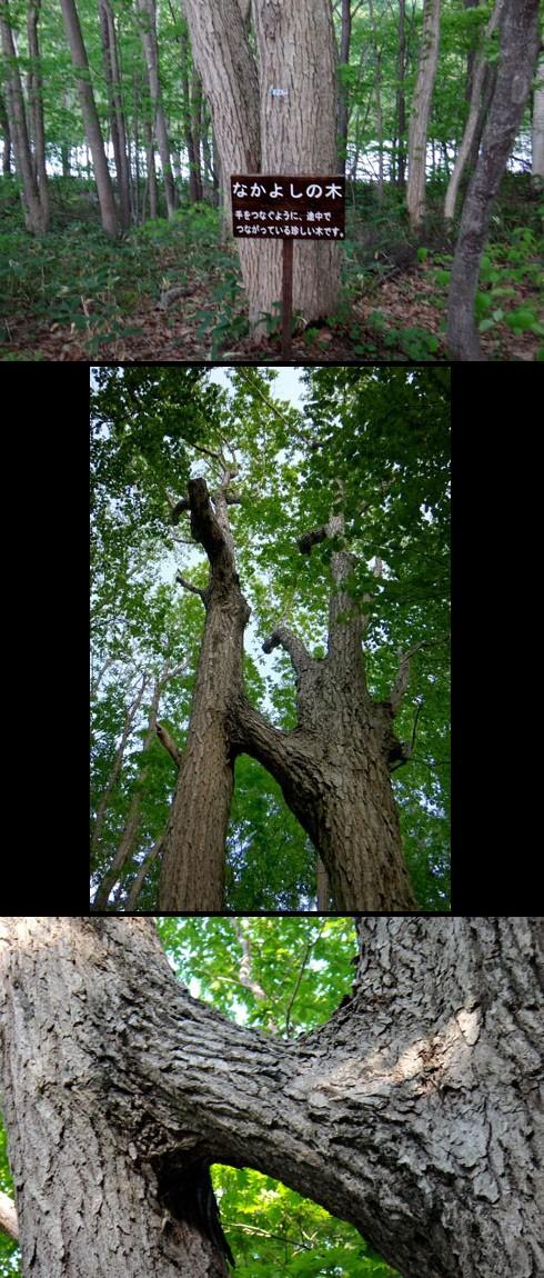 なかよしの木