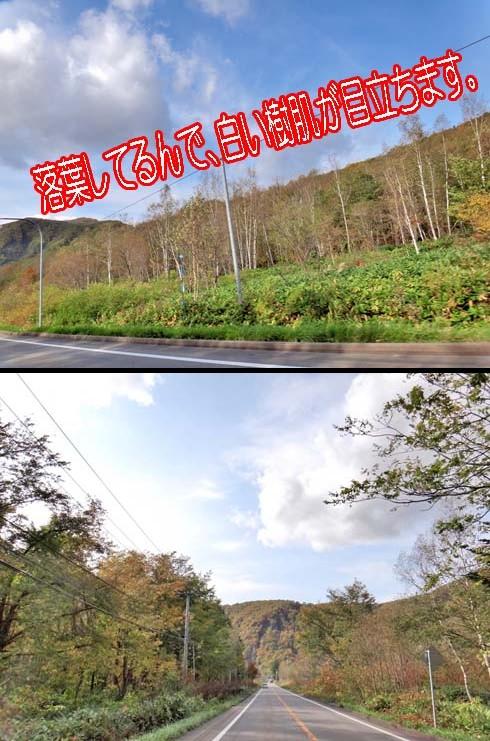 赤井川かな?