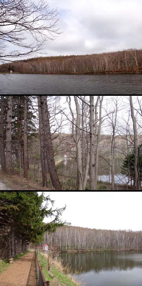 まだ白樺の樹皮が目立つ頃でした。