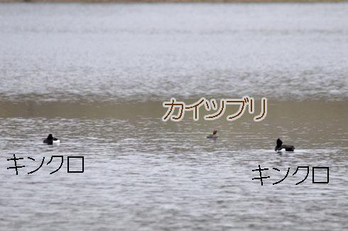 水鳥は他のとこで堪能してくらさい。