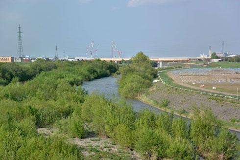 5月中旬の河川敷です。