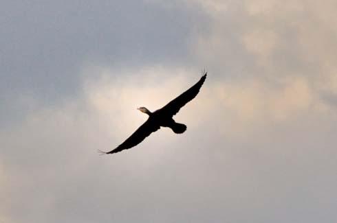 羽を広げると大きさがわかるです。