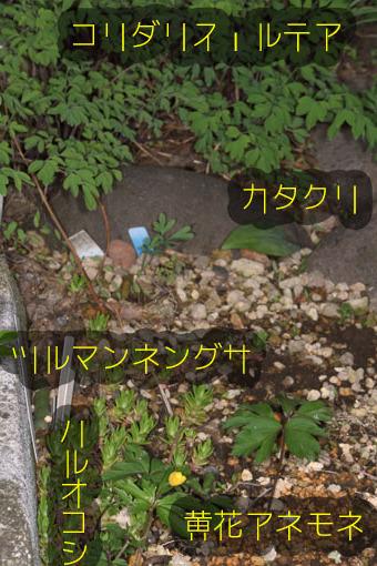 DSC_2081.jpg