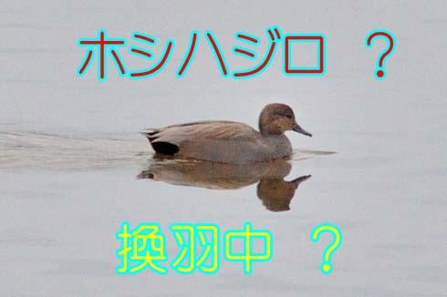 謎とした野鳥。