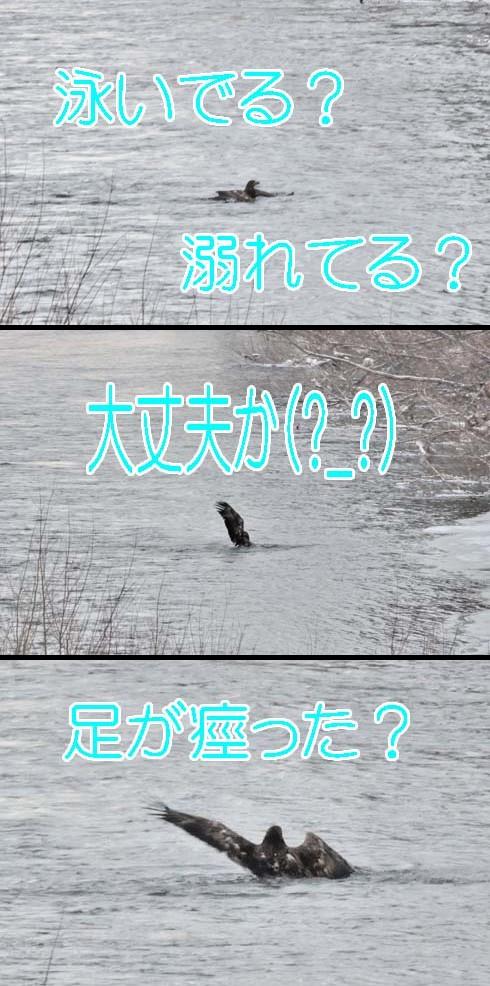 どーした(?_?)