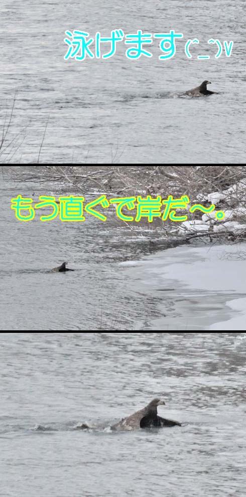 平泳ぎ(?_?)