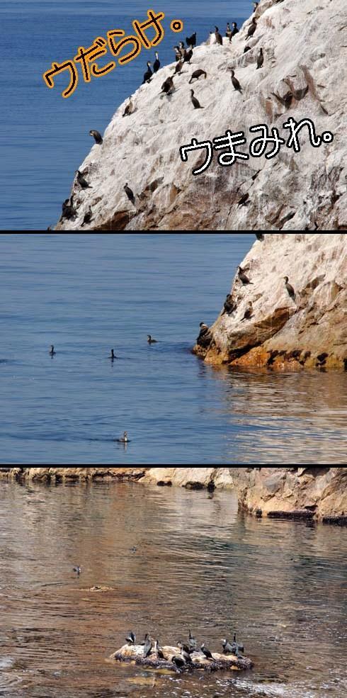 海鵜の楽園です。