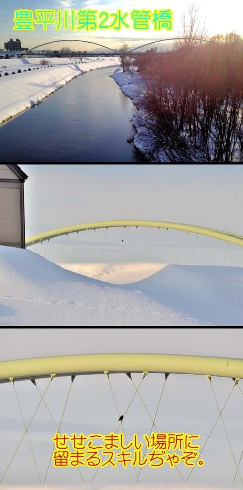 水管橋に佇む影はカラスです。