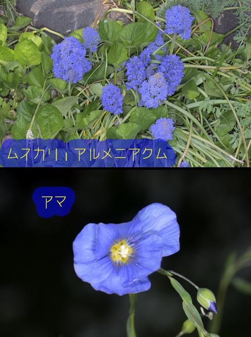 DSC_5554Q90.jpg