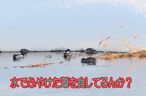 草は凍ってないんか(?_?)