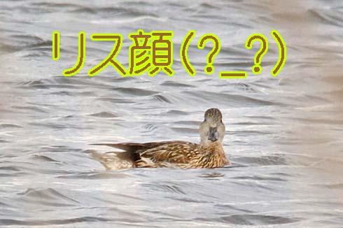 リス顔ぢゃね(?_?)