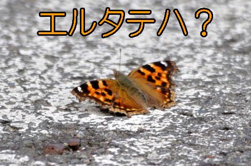 蝶々もムズイです。