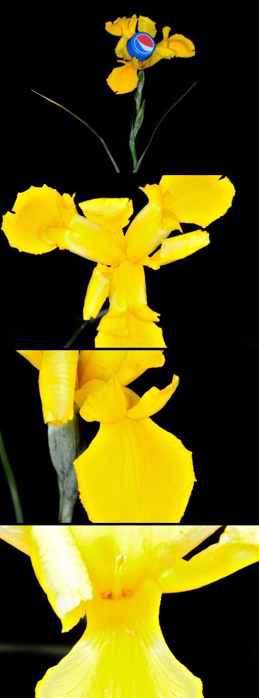 鮮やかな黄色い花は見事です。
