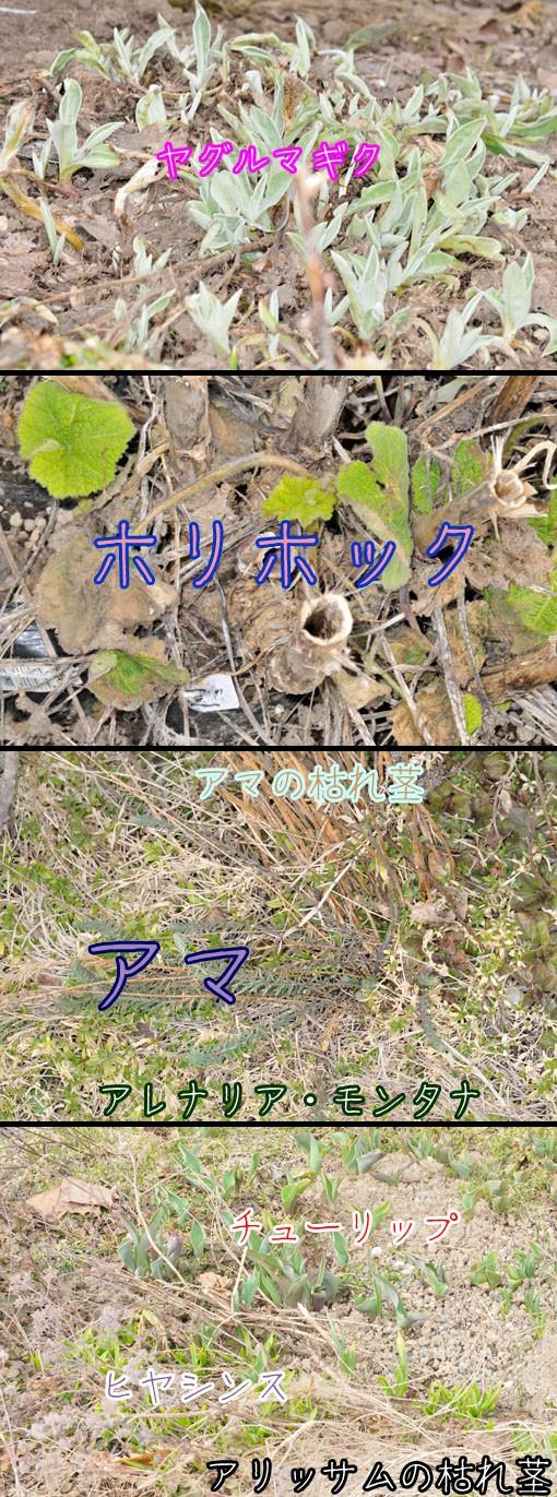 DSD_4284q90.jpg