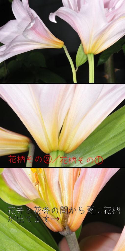 DSD_8677q90.jpg