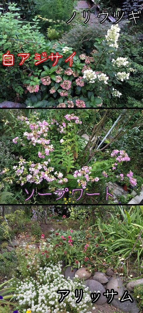 秋口の花色です。
