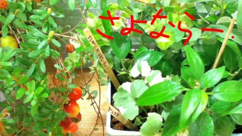 植物屋さんです。